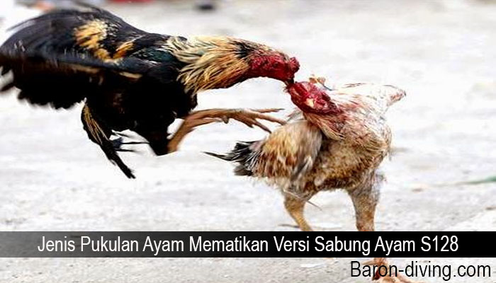 Jenis Pukulan Ayam Mematikan Versi Sabung Ayam S128