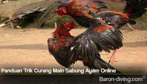 Panduan Trik Curang Main Sabung Ayam Online