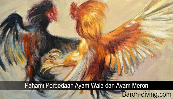 Pahami Perbedaan Ayam Wala dan Ayam Meron